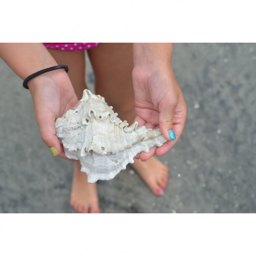 Conch in Young Hands