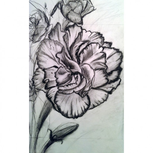 Carnation in Charcoal