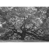 Angel Oak 2