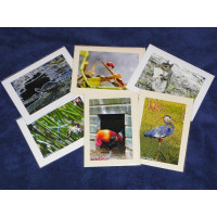 Greeting Card Set Wildlife