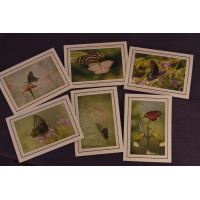 Flower & Butterfly Greeting Card Set