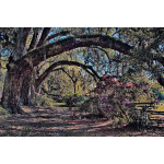 Old Magnolia Oaks and Azaleas