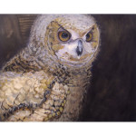 Portrait of an Owl Chick (Fine Art Print)