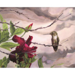 Hummingbird and Flower (Fine Art Print)