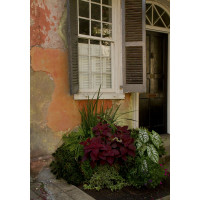 Black Shutters with Flower Bed