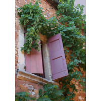 Shutters and Grapes