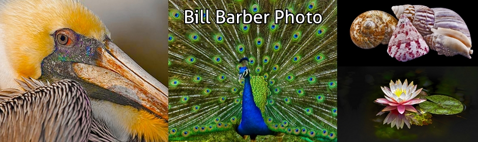 5 - Bill Barber Photography